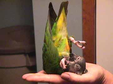 Bird Supplies Bird Toys Apprehensive 6 Pcs Wood Bird Toy Special Design Colorful Small Medium Parrots Big Bird Chew Swing Pets Toys Bird Supplies Easy To Lubricate